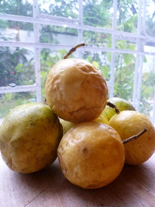 Pasion fruit Kiwi verrines and a mango 004